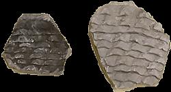 Cibola (corrugated) Gray Ware